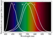 Spectral response of human cones